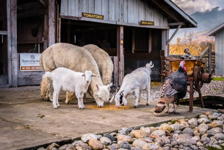 agri farm canada